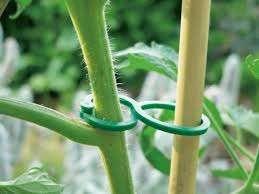 Nortene Tomatoclips 25 ks fixace na rajčata