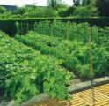 Síť pro pěstování plodin Trellinet /PP