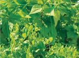 Intermas Síť pro pěstování plodin Trellinet /PP 1,7x10m