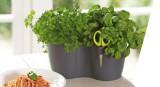 Elho Brussels Herbs Duo květináč na bylinky s nerezovými nůžkami