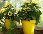 Květináč Green Basics Growpot 30 cm Elho