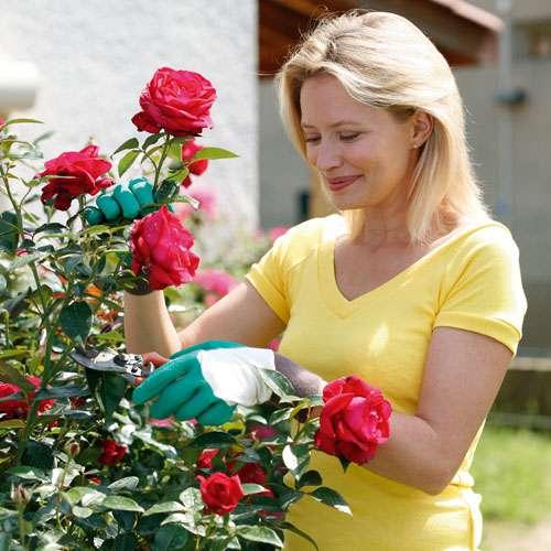 Propíchnutí odolné rukavice Rosier na růže Rostaing