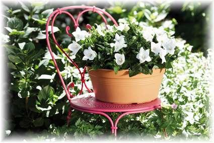 Elho Květináč Green Basics Bowl, žardina